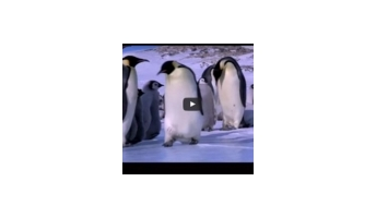 Penguins on Ice (the Bloopers)